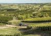 Vendimia y enoturismo en Uruguay