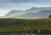 Rioja Viñedos Singulares