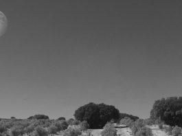 Dehesa de Luna Graciano