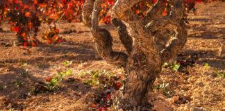 El Vino en Iberia
