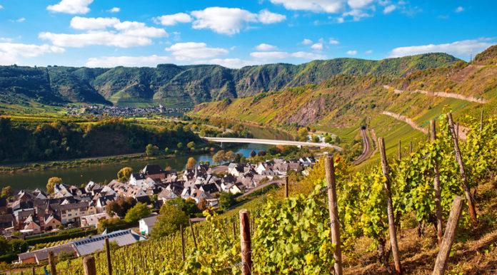 viñedos de Alemania
