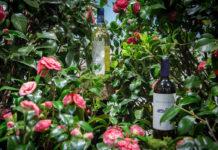 entre vinos y flores